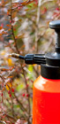 Diagnosticare si tratament pentru arbori, arbusti si plante ornamentale